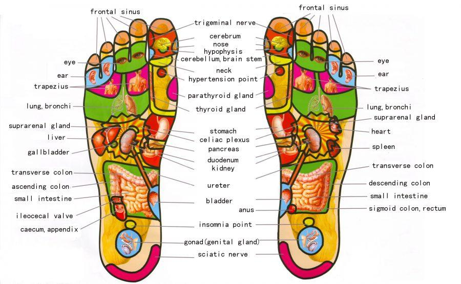 Our+feet+have+an+impact+on+how+our+body+responds+to+certain+issues.+Foot+relexology+chart+courtesy+of+www.Reflexology-map.com